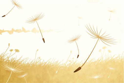 Dandelion petals on a breeze