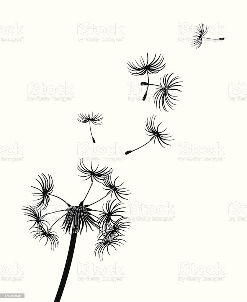 Dandelion Seeds Blow In The Wind Stock Vector Art More Images Of