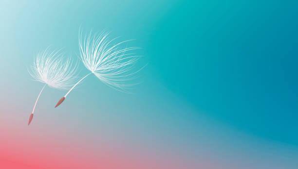 Löwenzahn Samen fliegen auf blauem Hintergrund Vektor-Illustration – Vektorgrafik