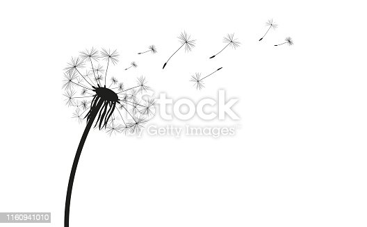 Dandelion silhouette on the white. Eps 10 vector file.
