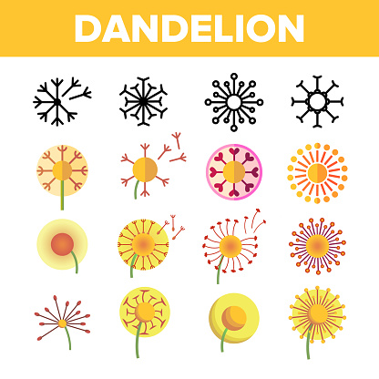 Dandelion, Spring Flower Vector Thin Line Icons Set