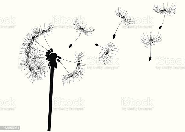 Free white dandelion Images, Pictures, and Royalty-Free