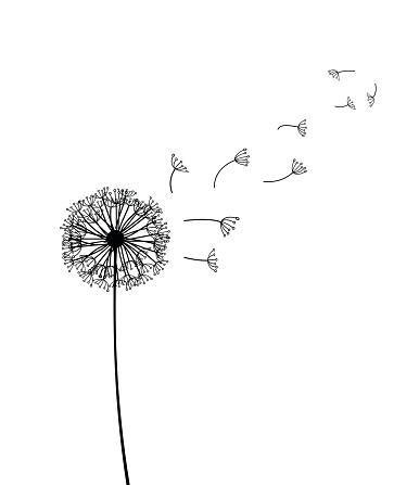 Dandelion vector illustration