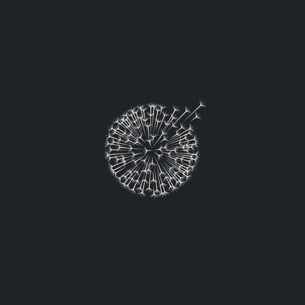 löwenzahn, weiße taraxacum-symbol. - löwenzahn korbblütler stock-grafiken, -clipart, -cartoons und -symbole