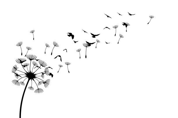 löwenzahn mit fliegenden vögeln und samen. vector isolierte dekorationselement aus verstreuten silhouetten. konzeptionelle illustration von freiheit und gelassenheit. - löwenzahn korbblütler stock-grafiken, -clipart, -cartoons und -symbole