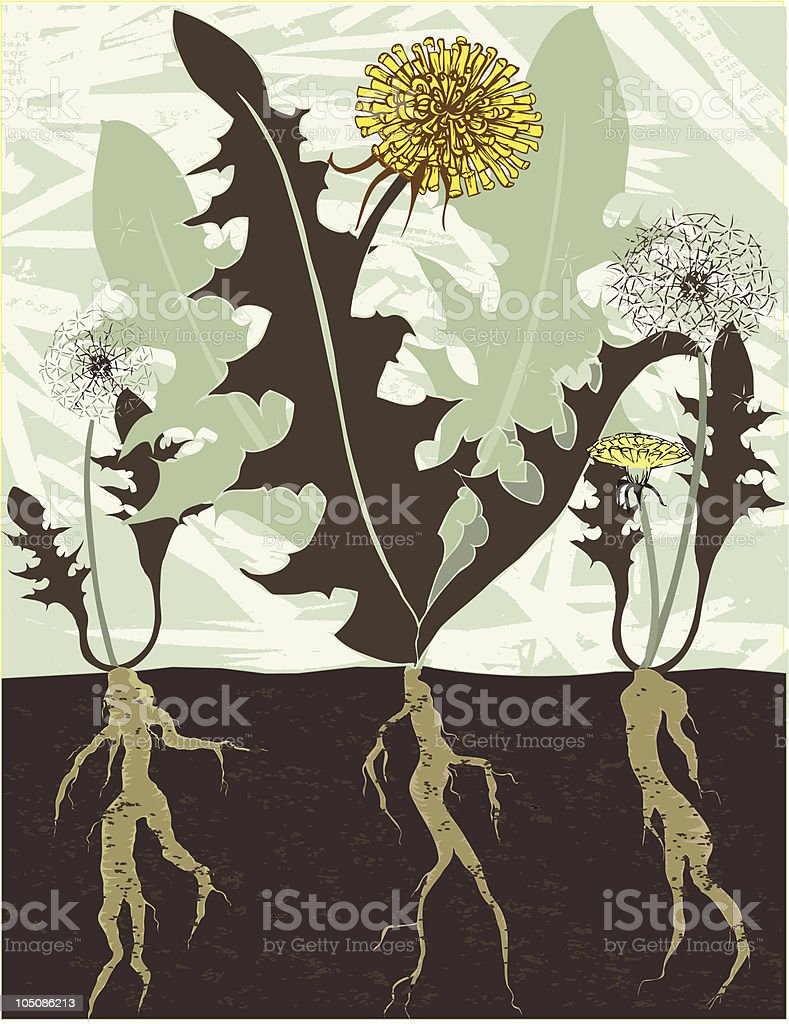 dandelions and roots vector art illustration