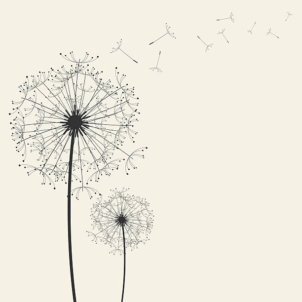 stockillustraties, clipart, cartoons en iconen met dandelions - paardenbloem