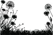 Meadow with dandelions and grass
