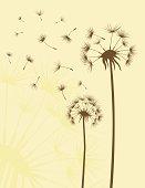 istock Dandelions 165961833