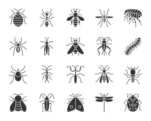 Danger Insect black silhouette icons vector set Danger Insect silhouette icons set. Sign kit of bed bug. Beetle pictogram collection includes termite, mole, bedbug. Simple danger insect black symbol isolated on white. Vector Icon shape for stamp beetle stock illustrations