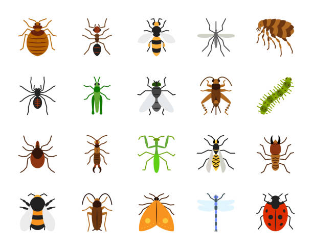 danger insect simple flat color icons vector set - bugs stock illustrations