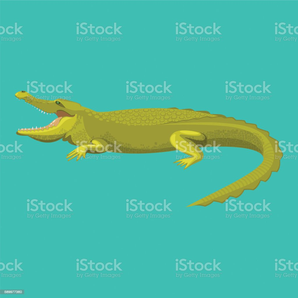Dangerous green alligator is showing his teeth - Illustration vectorielle