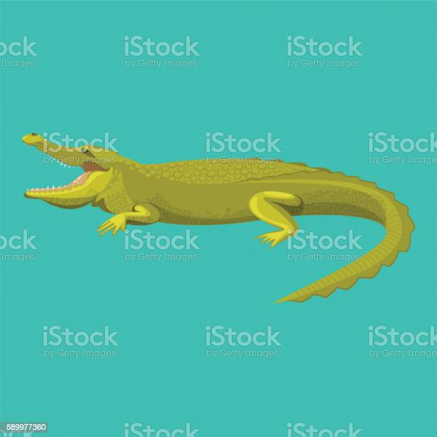 Dangerous Green Alligator Is Showing His Teeth Stock Illustration - Download Image Now