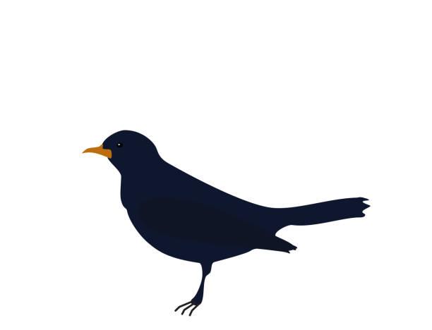 Dark blue bird Songbird on white background, flat design vector art illustration