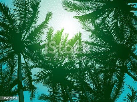 istock Dark dreen palm trees 984559202