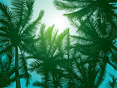 Dark dreen palm trees