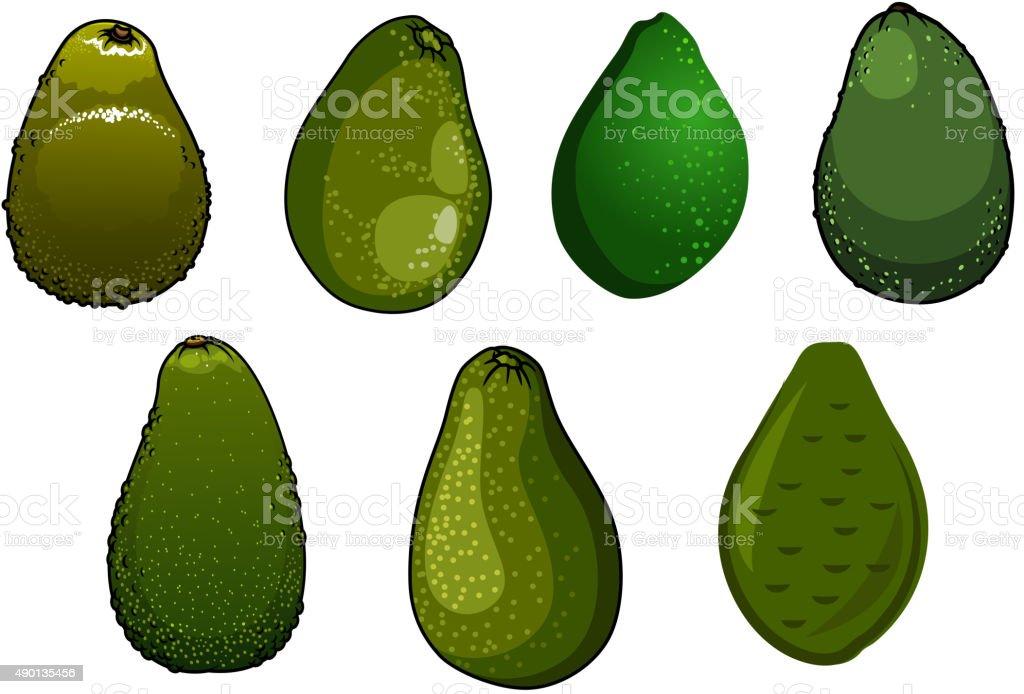 Dark green isolated avocado fruits vector art illustration