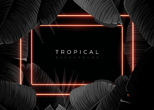 Dark monochrome tropical design with exotic banana leaves, soft neon frames and space for text. Vector summer template for poster, banner, card or flyer.