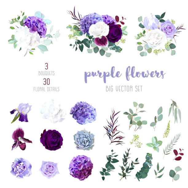 어두운 자주색 정원, 매 화 난초, 흰 장미와 보라색 장미, 라일락 수 국 - 보라색 stock illustrations