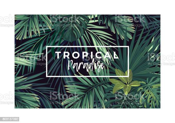 Dark vector tropical typography design with green jungle palm leaves vector id803137092?b=1&k=6&m=803137092&s=612x612&h=ea95h89 rtdcqxkqhwkn4j xwsi0gqfalgljww g5iw=
