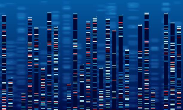 DNA data chart. Medicine test graphic, abstract genome sequences graph and genomics map vector illustration DNA data chart. Medicine test graphic, abstract genome sequences graph and genomics map. Medicine genomics data sequences, antibody testing or genetic chromosome barcoding vector illustration genomics stock illustrations