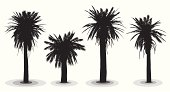 Highly detailed date palm trees silhouettes.