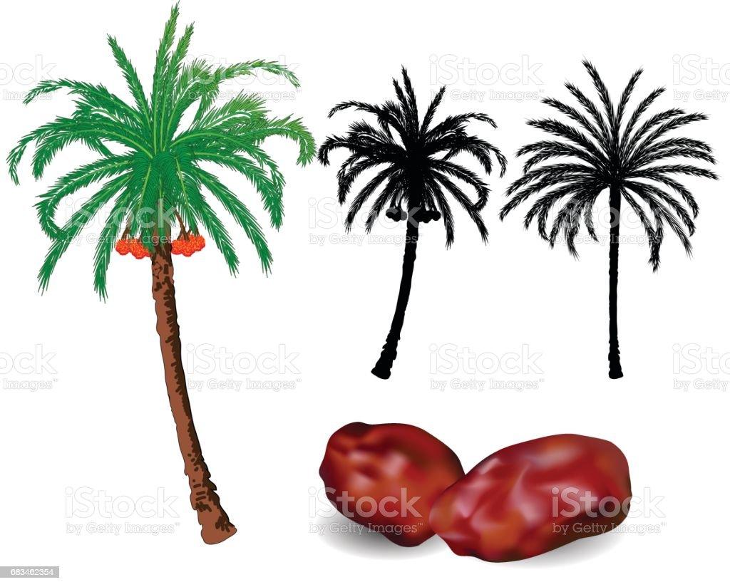 dates palm trees and fruit vector illustration stock vector art rh istockphoto com Cartoon Tree Clip Art Palm Tree Leaf Pattern