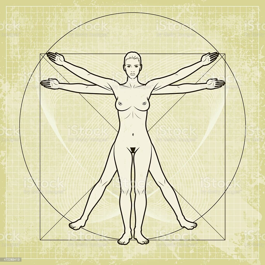 Davinci Woman 2 Stock Vector Art & More Images of Anatomy 472283413 ...