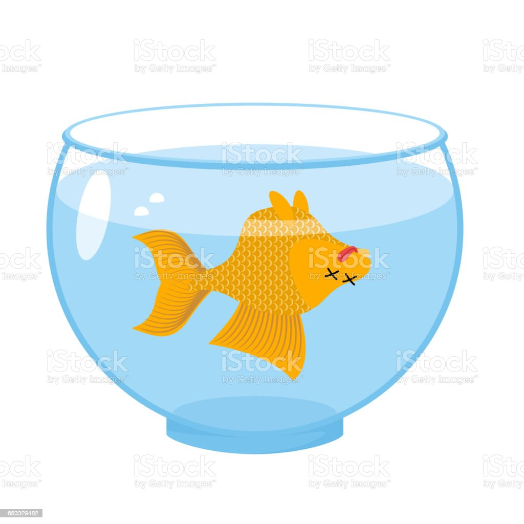 Dead gold fish in aquarium. Sea animal deceased. Corpse of goldfish royalty-free dead gold fish in aquarium sea animal deceased corpse of goldfish stock vector art & more images of animal