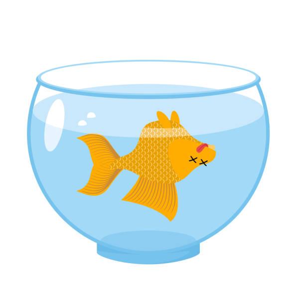 Dead Gold Fish In Aquarium Sea Animal Deceased Corpse Of Goldfish Vector Art Illustration