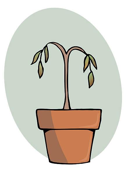 ilustrações de stock, clip art, desenhos animados e ícones de planta morta - planta morta