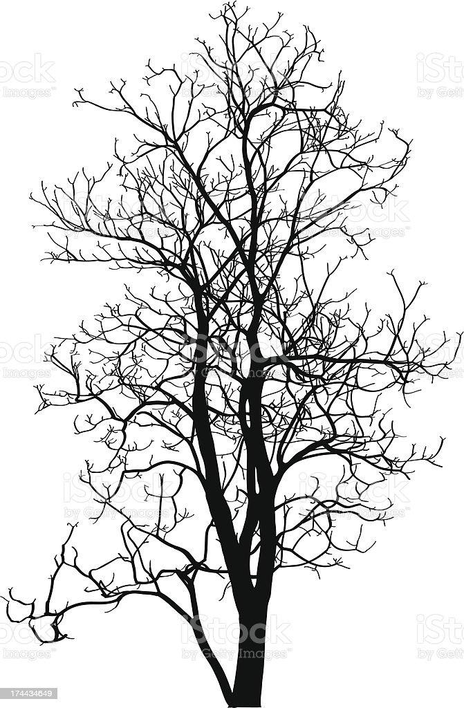 Ilustración De Dead árbol Sin Hojas Ilustración Vectorial Sketched Y