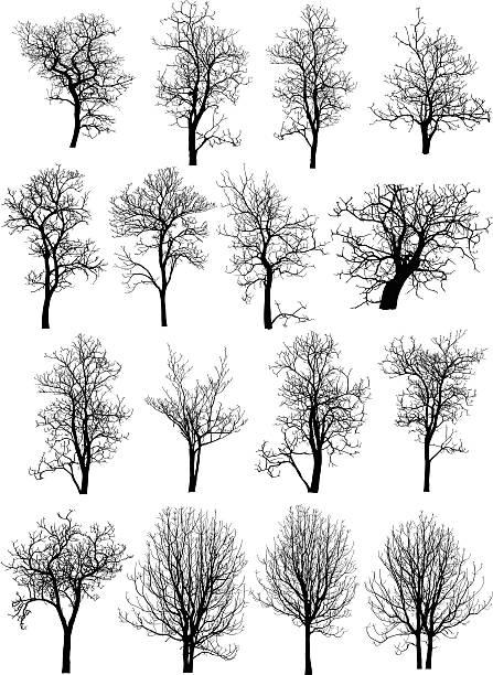 toter baum ohne blätter-vektor-illustration skizzierte - winterruhe stock-grafiken, -clipart, -cartoons und -symbole