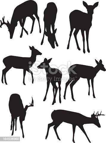 [i]This is a vector illustration of some deer silhouettes.[/i]   [url=http://www.istockphoto.com/file_closeup.php?id=7482387][img]http://www.istockphoto.com/file_thumbview_approve.php?size=1&id=7482387[/img][/url]  [b]Illustrations Lightbox:[/b]  [url=http://www.istockphoto.com/file_search.php?action=file&lightboxID=4304434][img]http://www.istockphoto.com/file_thumbview_approve.php?size=2&id=9603097[/img][/url]