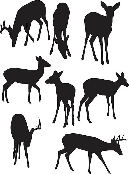Dear silhouettes filling a white background [i]This is a vector illustration of some deer silhouettes.[/i]   [url=http://www.istockphoto.com/file_closeup.php?id=7482387][img]http://www.istockphoto.com/file_thumbview_approve.php?size=1&id=7482387[/img][/url]  [b]Illustrations Lightbox:[/b]  [url=http://www.istockphoto.com/file_search.php?action=file&lightboxID=4304434][img]http://www.istockphoto.com/file_thumbview_approve.php?size=2&id=9603097[/img][/url] vertebrate stock illustrations