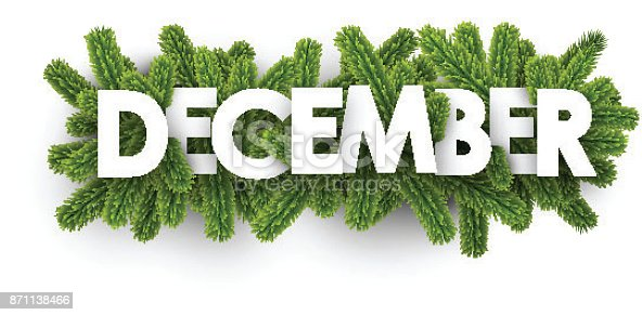 White december banner with green fir branches. Vector illustration.