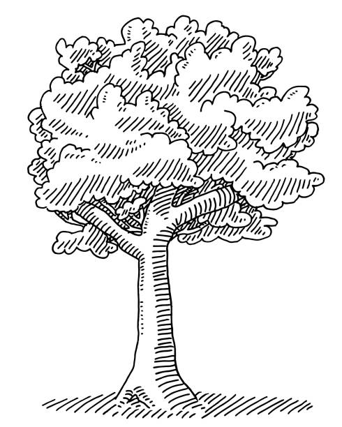 Deciduous Tree Nature Drawing Hand-drawn vector drawing of a Deciduous Tree, Nature Symbol. Black-and-White sketch on a transparent background (.eps-file). Included files are EPS (v10) and Hi-Res JPG. environment stock illustrations