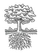 Hand-drawn vector drawing of a Deciduous Tree and the Roots, Nature Symbol. Black-and-White sketch on a transparent background (.eps-file). Included files are EPS (v10) and Hi-Res JPG.
