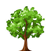 Vector illustration of a green deciduous tree isolated on a white background.