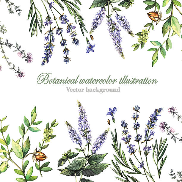 Decorative background with medicinal plants Decorative background with medicinal plants lavender plant stock illustrations