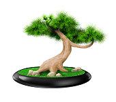 Vector graphics. Decorative bonsai tree pine in pot. Landscape Japanese eco design