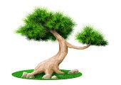 Vector graphics. Decorative bonsai tree pine isolated. Landscape Japanese eco design
