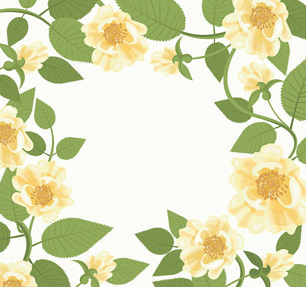 Decorative Border With Yellow Roses Square floral frame with wild roses and leaves. Floral background for your design. Copy space. Vector file is EPS8. All elements are grouped. wild rose stock illustrations