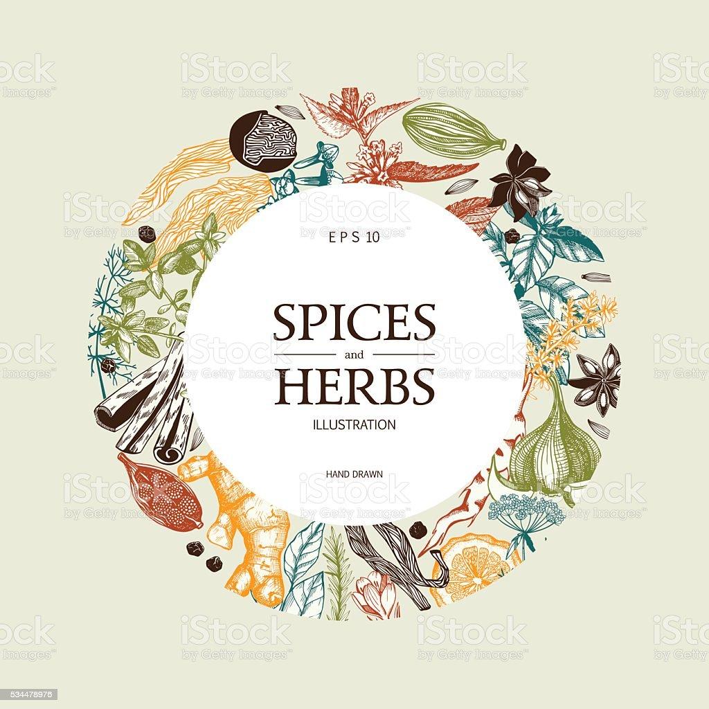 Decorative colorful background with vintage spice sketch. vector art illustration