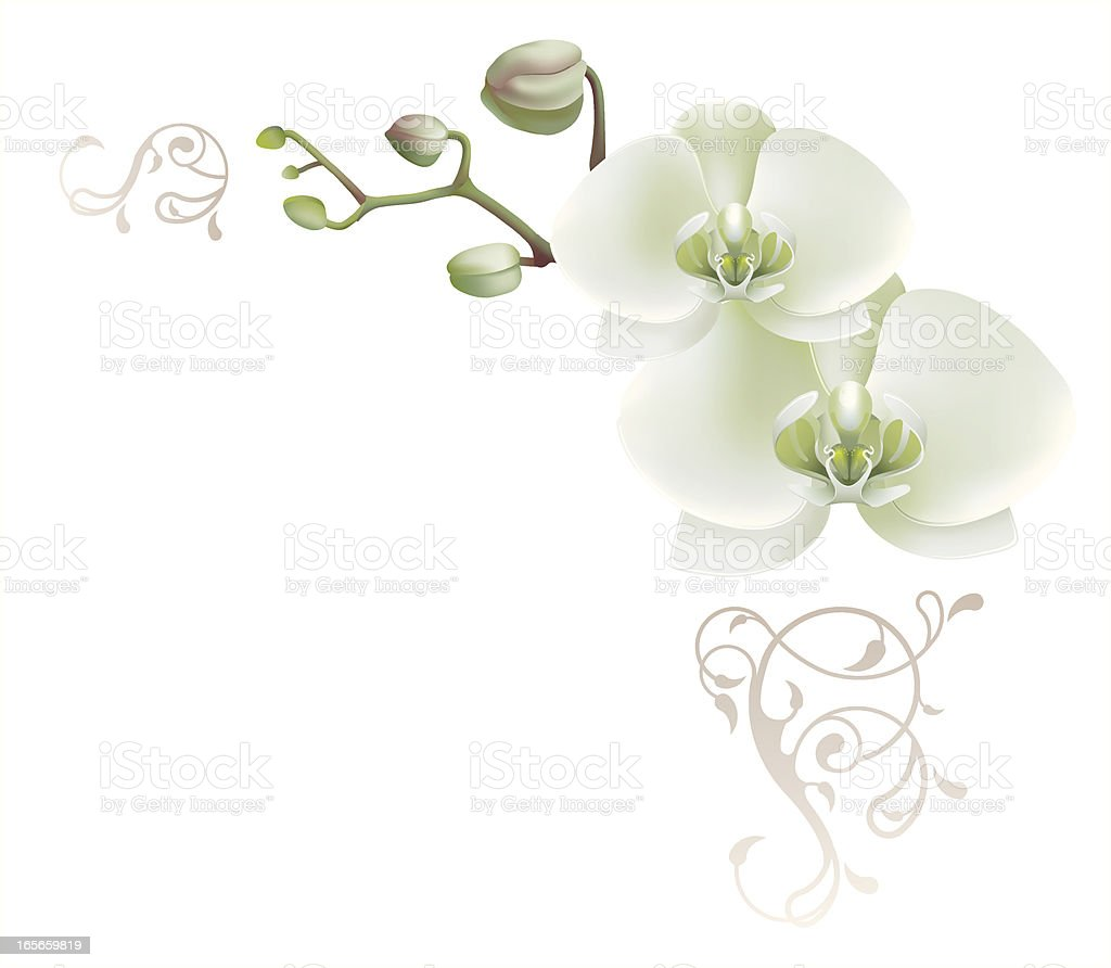 Decorative corner with white orchid royalty-free stock vector art