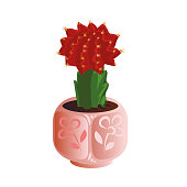 Decorative exotic cactus with a red top in a pink flower pot. Exotic home plant concept. Isolated vector icon illustration on white background in cartoon style.