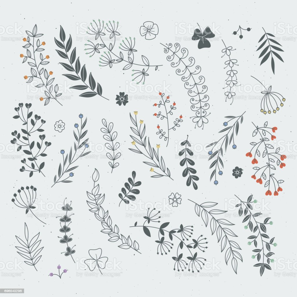 Decorative Floral Elements For Design Projects Rustic Branches And