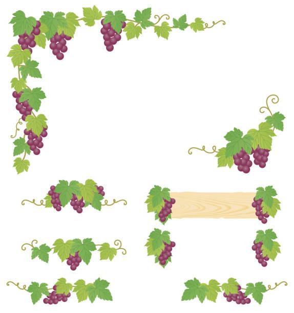 bildbanksillustrationer, clip art samt tecknat material och ikoner med dekorativa druva illustration. - vineyard