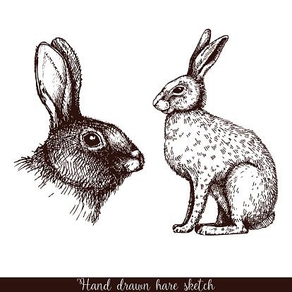 Decorative hare portrait.