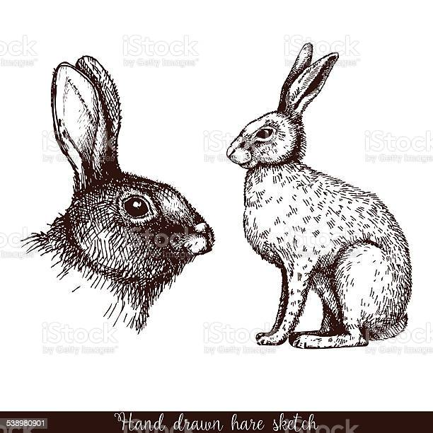 Decorative hare portrait vector id538980901?b=1&k=6&m=538980901&s=612x612&h=ehygc7exy l9o5psrsj8tmxsx4umxqpljzo9u99k3ju=